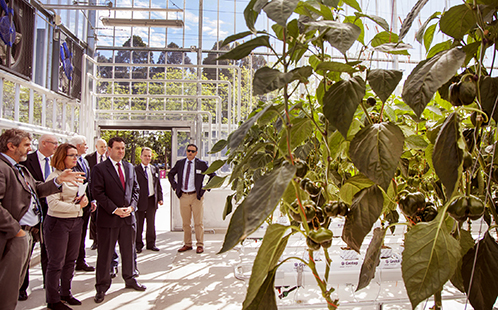 National Vegetable Protected Cropping Centre
