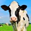 Farm management_Hagare