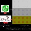 Carbon nanotubes_Xiang